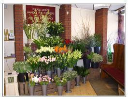 Penny Lane Flowers - Liverpool Shop Interior